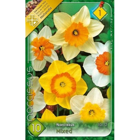 Narcissus Large Cupped mix - 10 bulbi KM