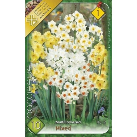 Narcissus multiflowered mix - 10 bulbi KM