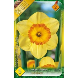 Narcissus Delibes