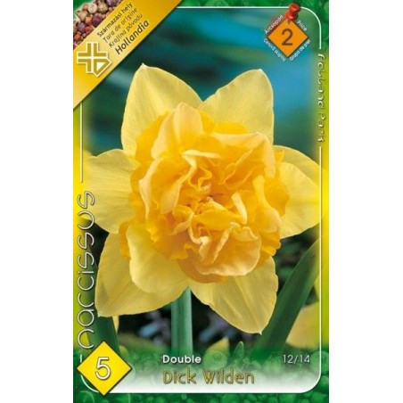Narcissus Dick Wilden - 5 bulbi KM