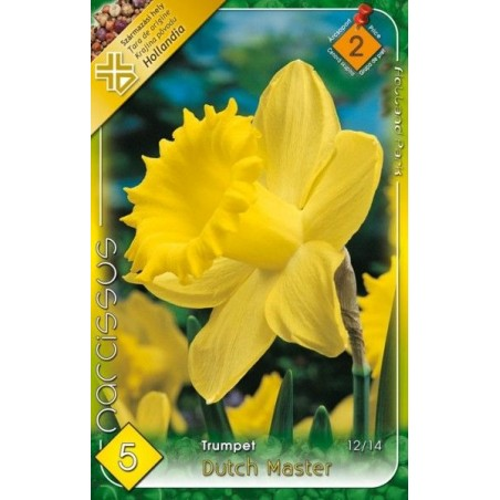 Narcissus Dutch Master - 5 bulbi KM