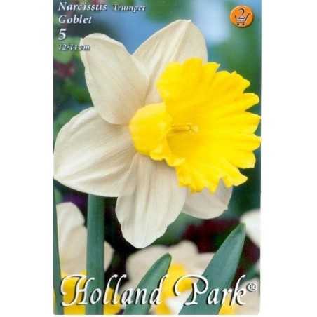 Narcissus Goblet - 5 bulbi KM