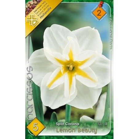 Narcissus Lemon Beauty - 5 bulbi KM