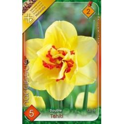 Narcissus Tahiti