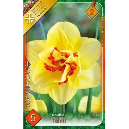 Narcissus Tahiti - 5 bulbi KM