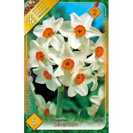 Narcissus tazetta Geranium - 5 bulbi KM