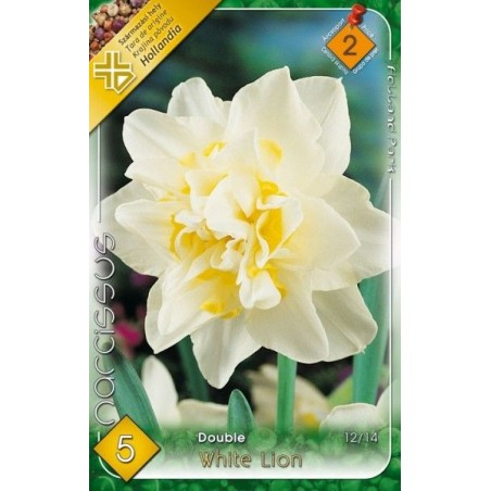 Narcissus White Lion - 5 bulbi KM