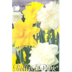 Narcissus Duo Double White & Yellow