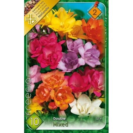 Frezia cu flori duble mix