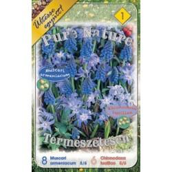 Pure Nature - Muscari armeniacum 8 bulbi si Chionodoxa luciliae 6 bulbi - KM