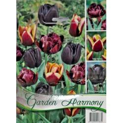 Garden Harmony - Colectie Lalele negre 3x6 - KM