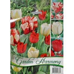 Garden Harmony - Colectie Lalele rosu cu alb 3x6 - KM
