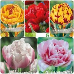 Pachet lalele Double flower mix