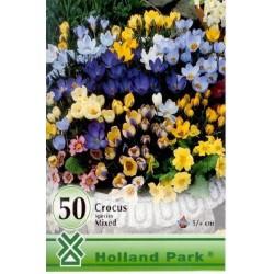 Crocus botanical mix - KM 50 bulbi