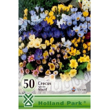 Crocus botanical mix - KM 50 bulbi