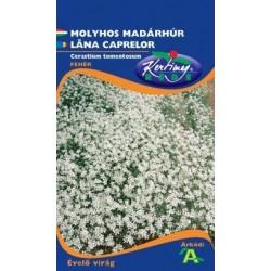 Seminte lana caprelor - KM - Cerastium tomentosum