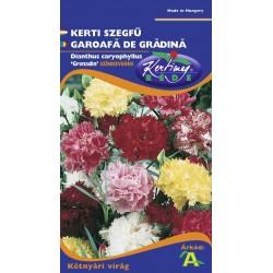 Seminte garoafa de gradina - KM - Dianthus caryophyllus Grenadin mix