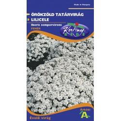 Seminte lilicele - KM - Iberis sempervirens
