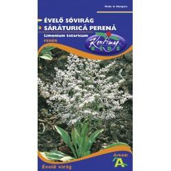 Seminte saraturica perena - KM - Limonium tataricum