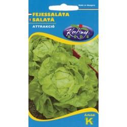 Seminte salata Atractie - KM - Lactuca sativa var. capitata