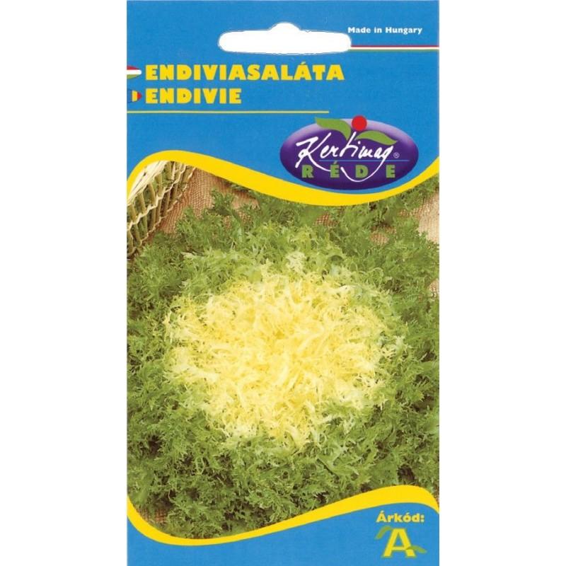 Seminte endivia - KM - Cichorium endivia var. crispum
