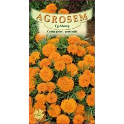Craite pitice portocalii seminte - AS - Tagetes patula nana Orange