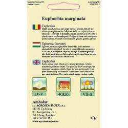 Euphorbia seminte - AS - Euphorbia marginata