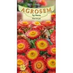 Flori de paie portocalii seminte - AS - Helichrysum bracteatum