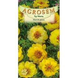 Flori de piatra duble galbene seminte - AS - Portulaca grandiflora