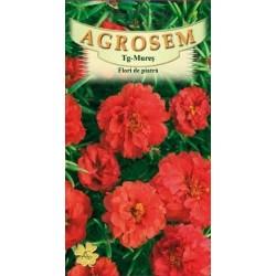 Flori de piatra duble rosii seminte - AS - Portulaca grandiflora