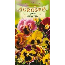 Panselute Rococo seminte - AS - Viola x witrockiana