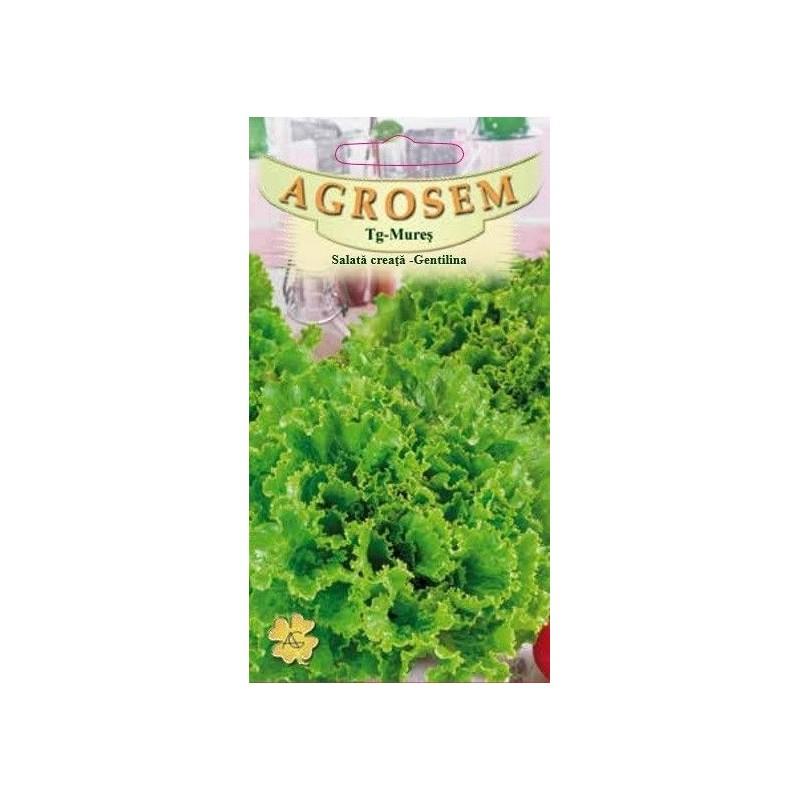 Salata creata Gentilina seminte - Lactuca sativa