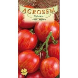 Tomate Tigerella seminte - AS - Lycopersicon esculentum