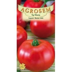 Tomate Buzau 1600 seminte - AS - Lycopersicon esculentum