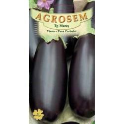 Vinete Pana Corbului seminte - AS - Solanum melongena