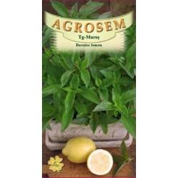 Busuioc Lemon seminte - Ocimum basilicum citriodora