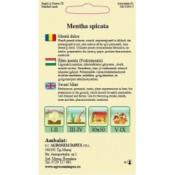 Menta dulce seminte - Mentha spicata