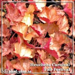 Heuchera Carnival Fall Festival G-9