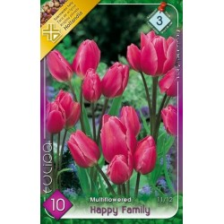 Bulbi lalele Happy Family - KM - 10 bulbi