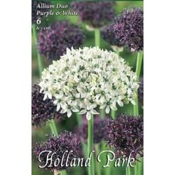 Allium Duo Purple & White - 6 bulbi KM