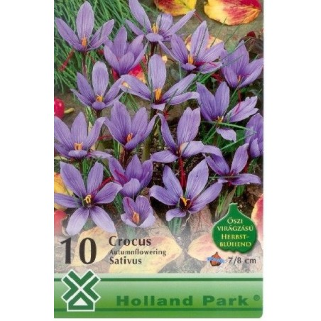 Crocus sativus - KM 10 bulbi