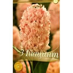 Hyacinthus Prince of Love 3 bulbi - AS