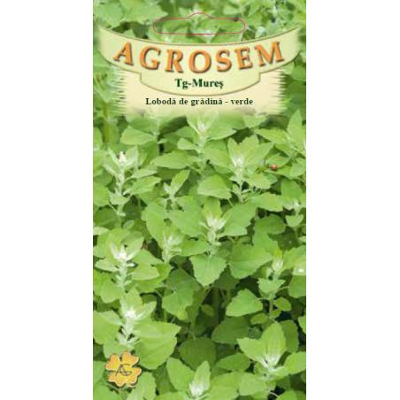Seminte de Loboda de gradina verde - AS - Atriplex hortensis f. viridis