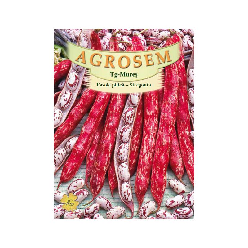 Seminte de Fasole boabe Stregonta - BigPack - AS - Phaseolus vulgaris var. nanus