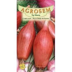 Ceapa rosie seminte - Allium cepa Rossa lunga di Firenze