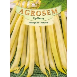 Seminte de Fasole pitica galbena Maxidor - 500g - AS - Phaseolus vulgaris var. nanus
