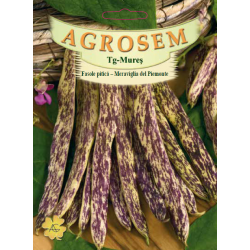 Seminte de Fasole pitica Meraviglia del Piemonte - BigPack - AS - Phaseolus vulgaris var. nanus