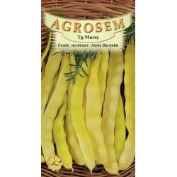 Seminte de Fasole urcatoare Auria Bacaului - 500g - AS - Phaseolus vulgaris