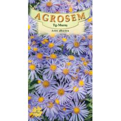 Seminte de Aster albastru - AS - Aster amellus