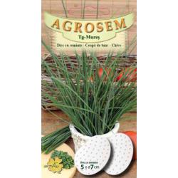 Seminte de Ceapa de tuns - AS disc - Allium schoenoprasum